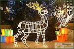 Glasgow City Guide Photographs: Glasgow at NightChristmas Reindeer.jpg08 December 2004 17:33