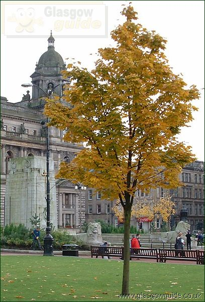 Glasgow Photo:Autumn Leaves in Glasgow City Centre: Click here to go back to the index page