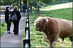 Glasgow City Guide Photographs: Pollok ParkPollok Park 007.JPG05 September 2004 17:29