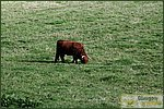 Glasgow City Guide Photographs: Pollok ParkPollok Park 010.JPG05 September 2004 17:36