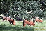 Glasgow City Guide Photographs: Pollok ParkPollok Park 011.JPG05 September 2004 17:34