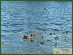 Glasgow City Guide Photographs: Lennoxtown  Whitefield Pond 14.JPG  11 July 2006 21:10